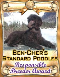 Ben-Cher's AKC Chocolate Standard Poodles Puppies